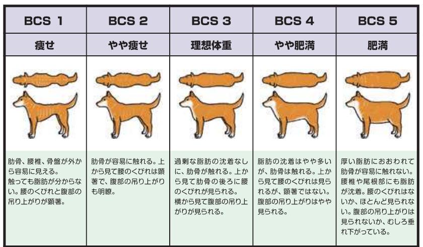 ボディ・コンディション・スコア(BCS)