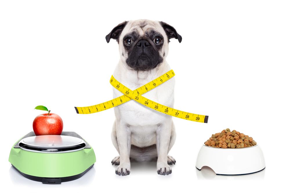 日頃の体重を知っておくと健康管理がしやすい